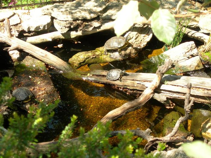 notre bassin pour tortues... - Page 2 Les_3_10
