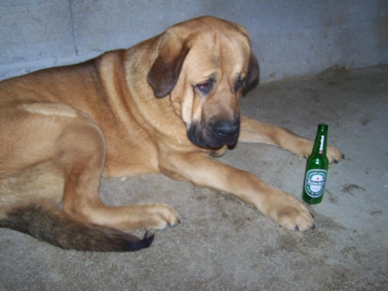 Problème d'alcoolisme chez le mâtin? 100_4712