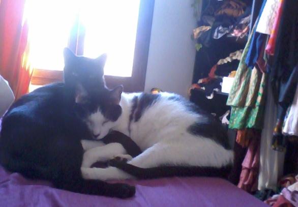 Hoodie et Charlie, deux grands traumatisés qui ont bien changés ...plus de 2 ans d'attente Charly12