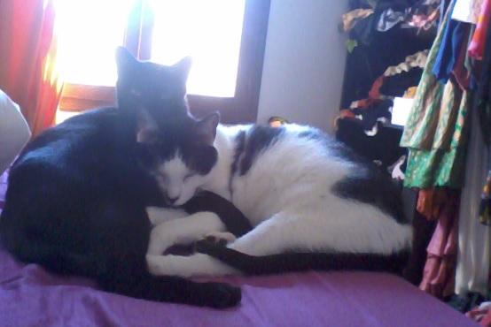 Hoodie et Charlie, deux grands traumatisés qui ont bien changés ...plus de 2 ans d'attente Charly13