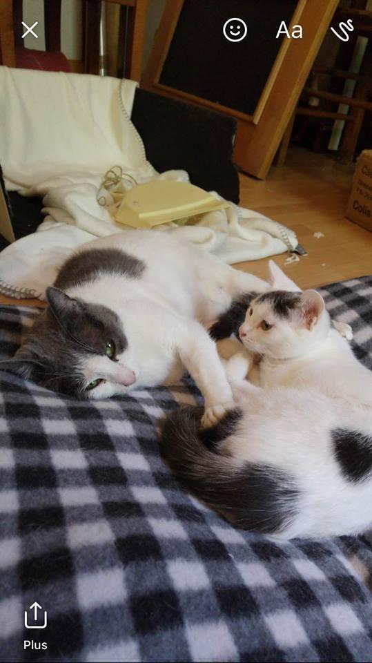 Gribouille et Daisy, passé difficile... très craintif mais de plus en plus à l'aise Daisy_15