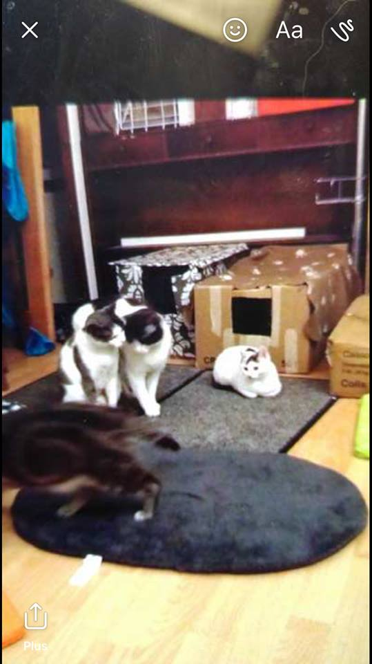 Gribouille et Daisy, passé difficile... très craintif mais de plus en plus à l'aise Gribou14