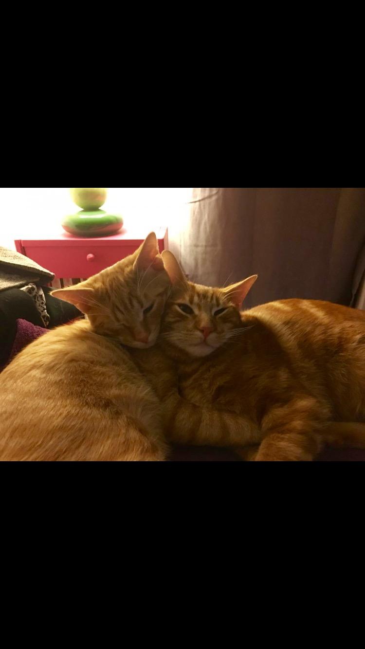 Deux beautés <3, Bijou et Lucky, non séparables Img_2211