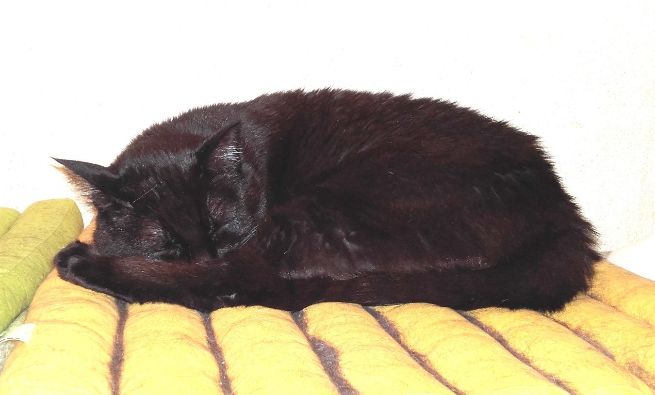 Lily, notre panthère noire.... (anciennement Lydie 2007) - Page 8 20180513
