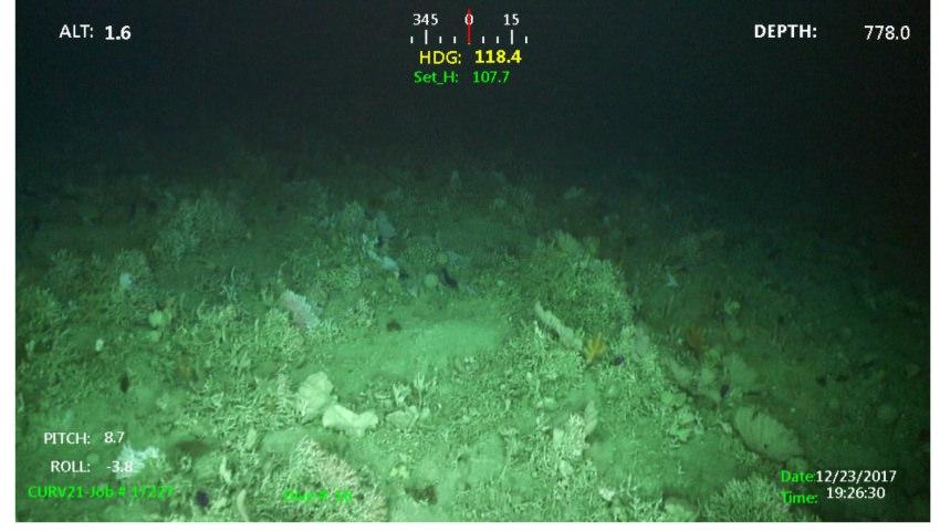 Recherche du sous-marin argentin disparu: les news (1) - Page 34 39284610