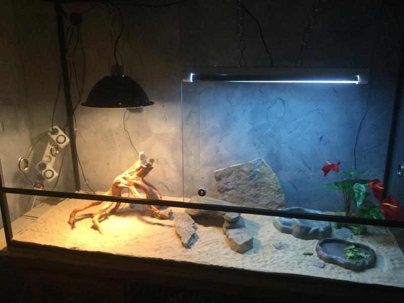 Mon nouveau terrarium.. besoin d'aide pour l'améliorer.. 1ad06a10