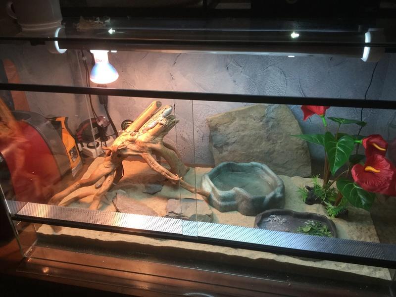 Mon nouveau terrarium.. besoin d'aide pour l'améliorer.. 63bc9f10