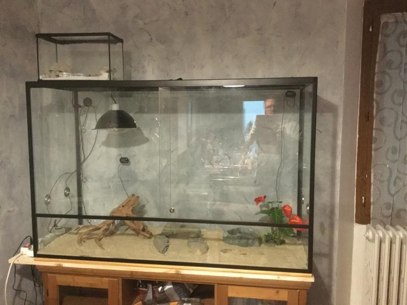 Mon nouveau terrarium.. besoin d'aide pour l'améliorer.. Image10