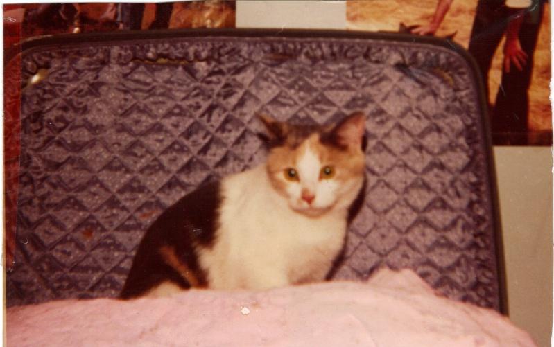 PREVENTION ETE : Non les chats ne retombent pas toujours sur leurs pattes Mimine11