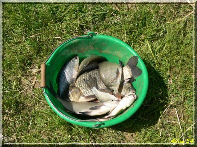 Pesca au Lez Pec510