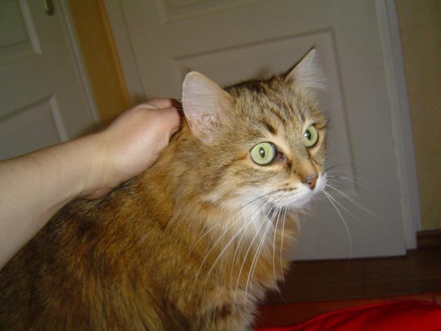 Ma mamie chat Dsc04210
