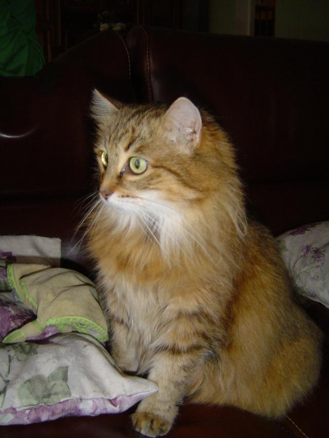 Ma mamie chat Dsc04211