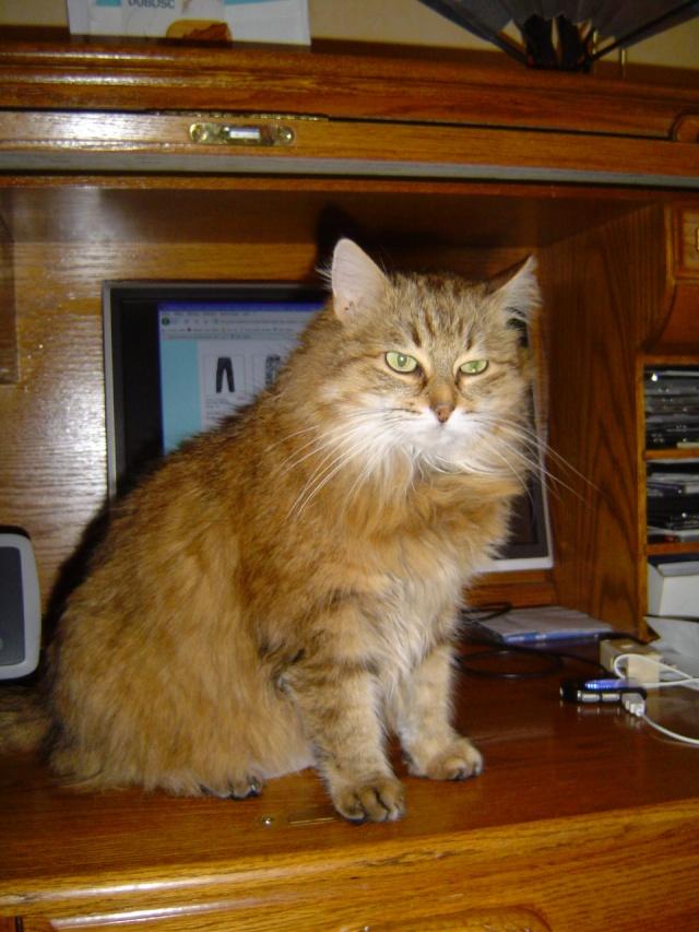 Ma mamie chat Dsc04212