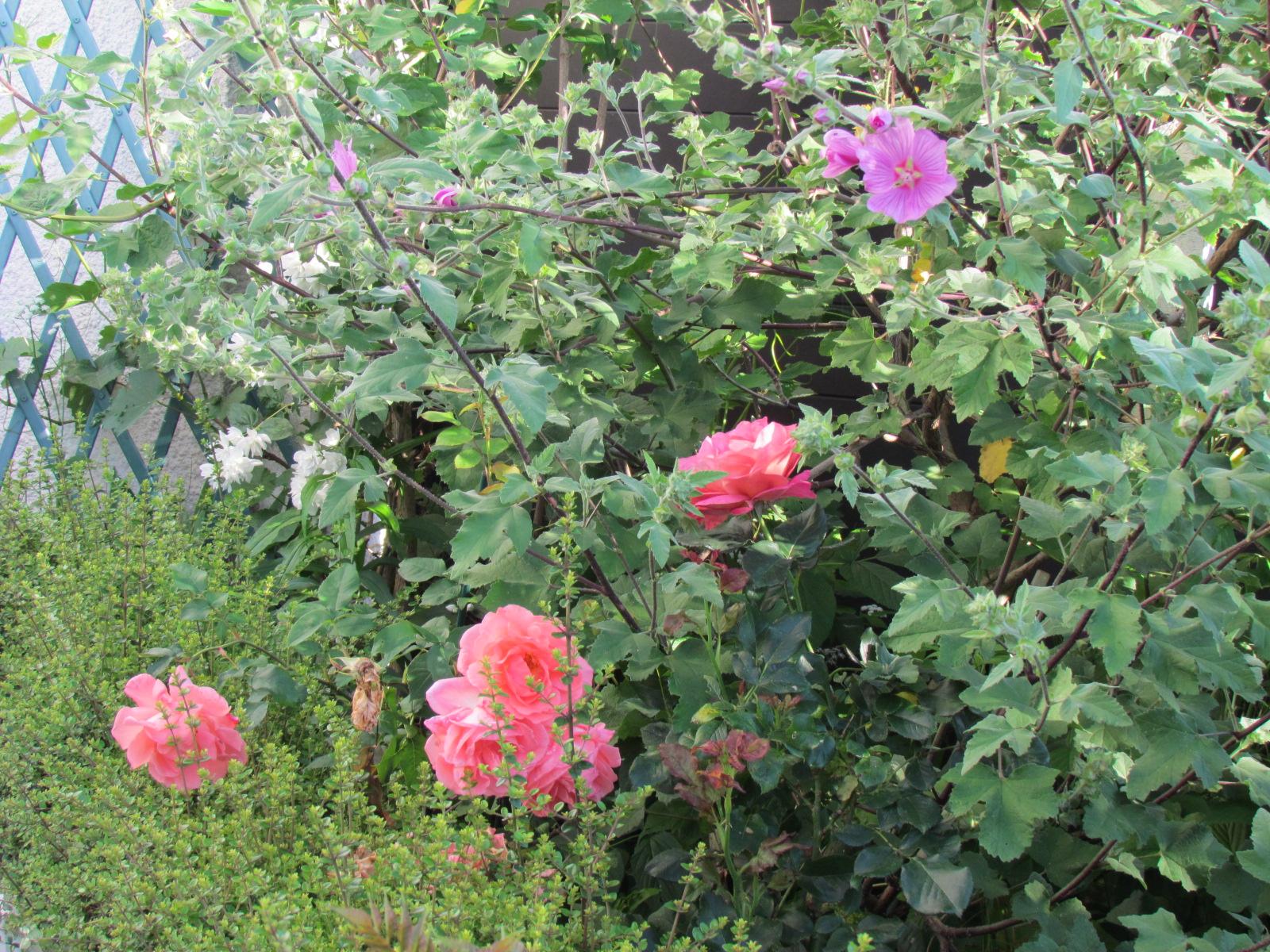 mon jardinet 2018 Dimanc15