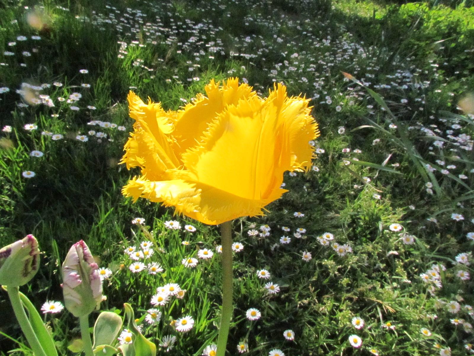 mon jardinet 2018 Img_0072