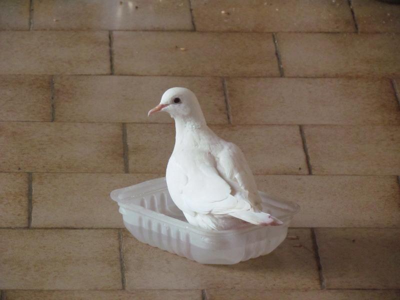 photo du jour - Page 14 Oiseau10