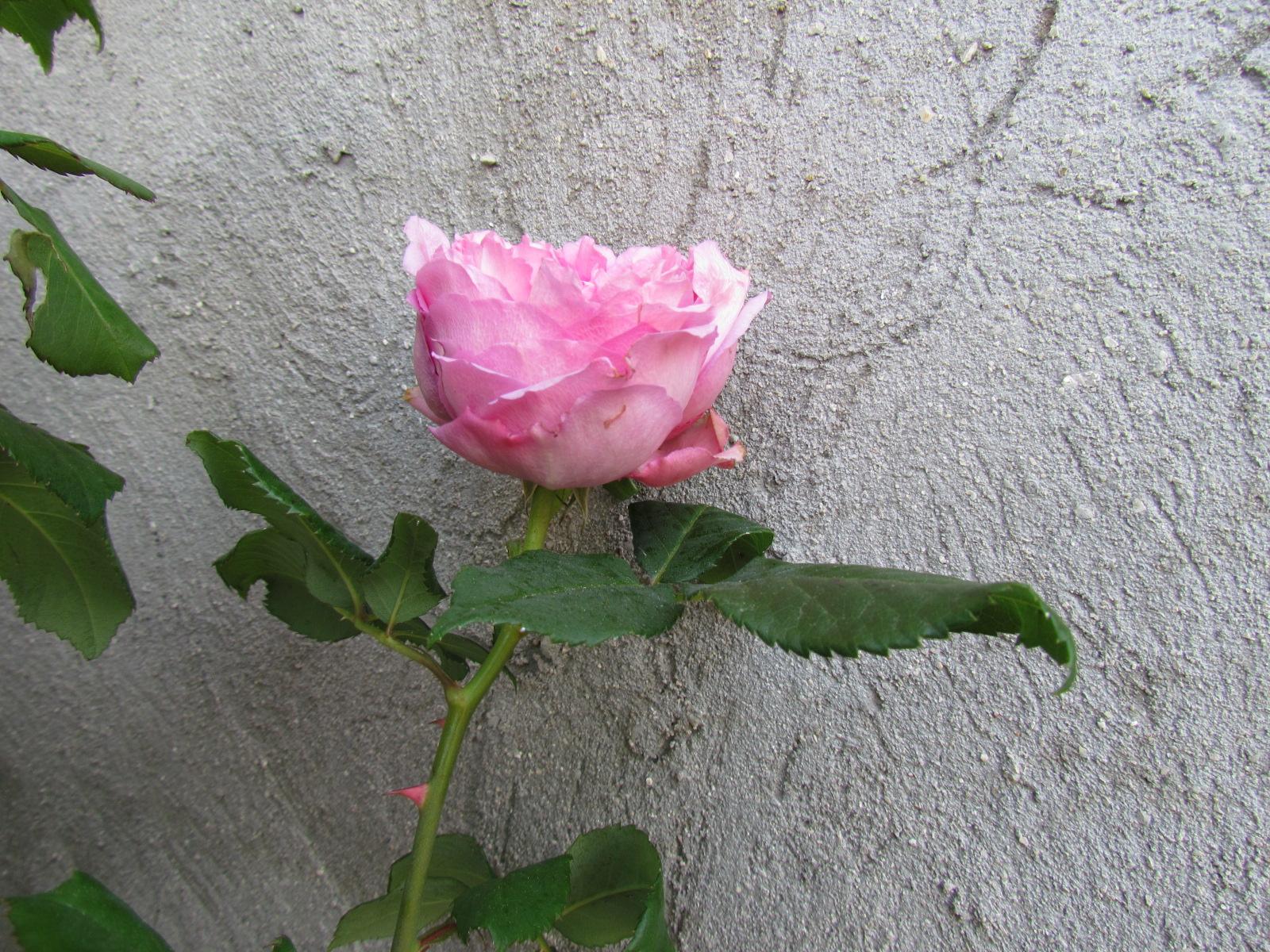 mon jardinet 2018 Xx_4610