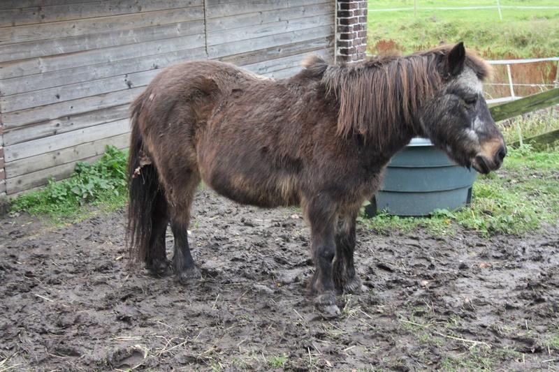 MASCOTTE - ONC poney née en 1993 - adoptée en octobre 2014 par Elsa - Page 2 24201312