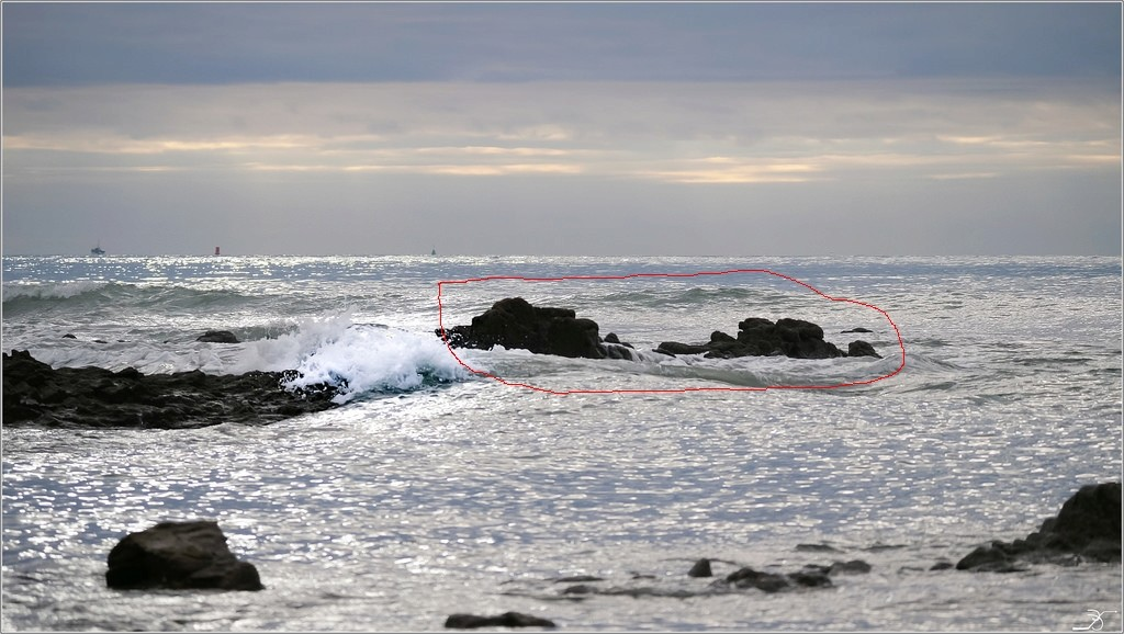 Golfe du Morbihan : le vieux loup de mer albinos 38661710