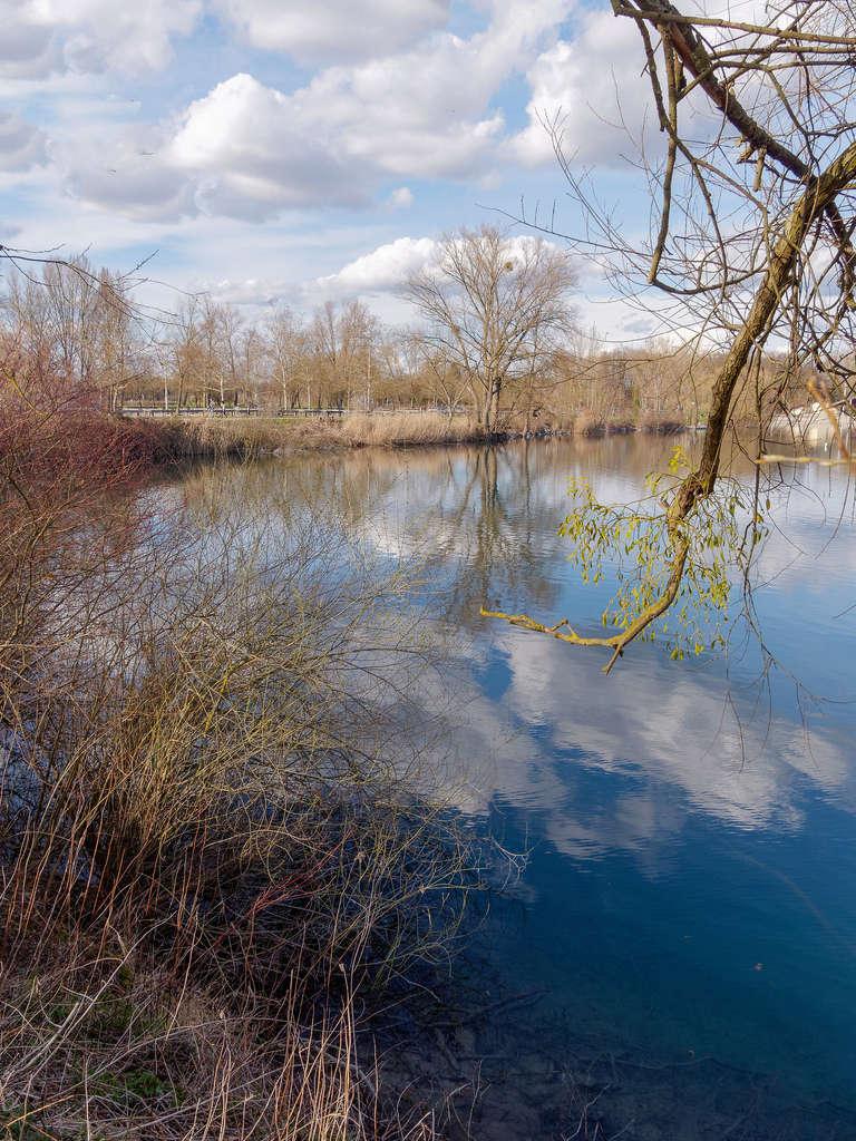 Fin d'après-midi sur l'étang... 41111710