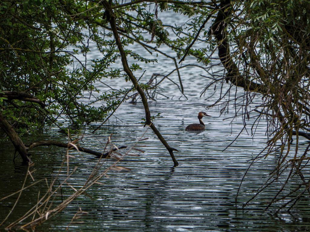 Silhouette sur l'étang... 42159710