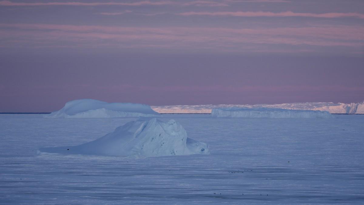 Antarctique Dlrew11
