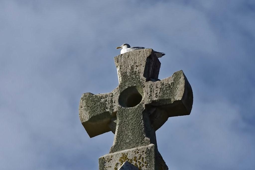 """Le cri du goéland """"croix croix croix"""" ! Dsc_1119"""