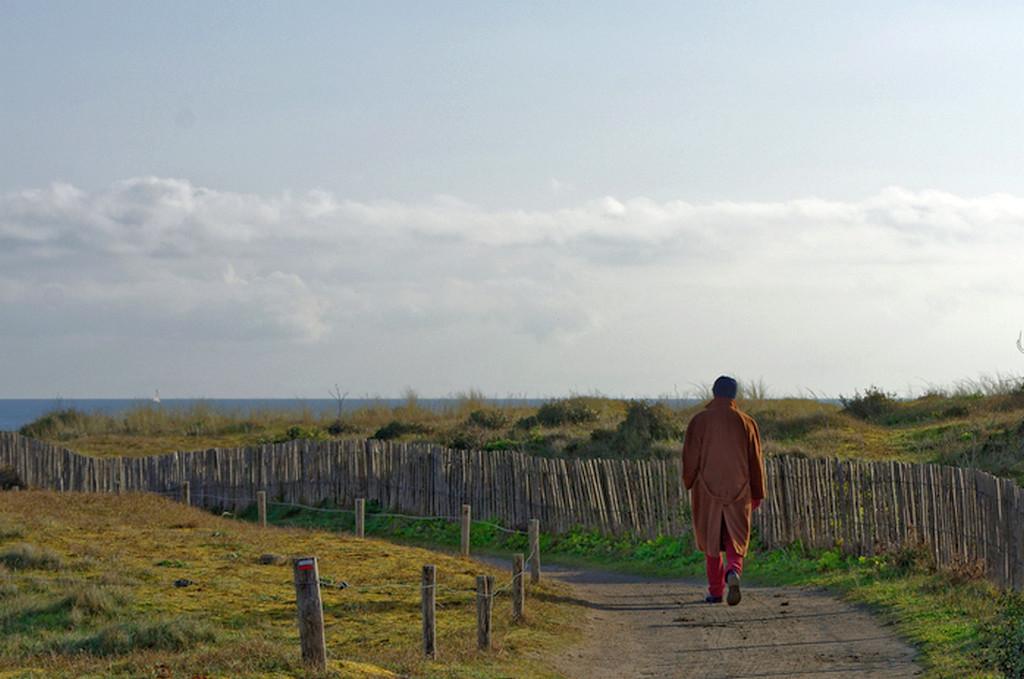 Le solitaire de la Pointe du Conguel Quiberon ! Dsc_1634