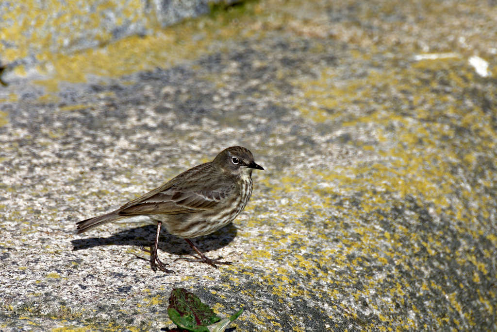 N'oiseau !!! Dsc_2612