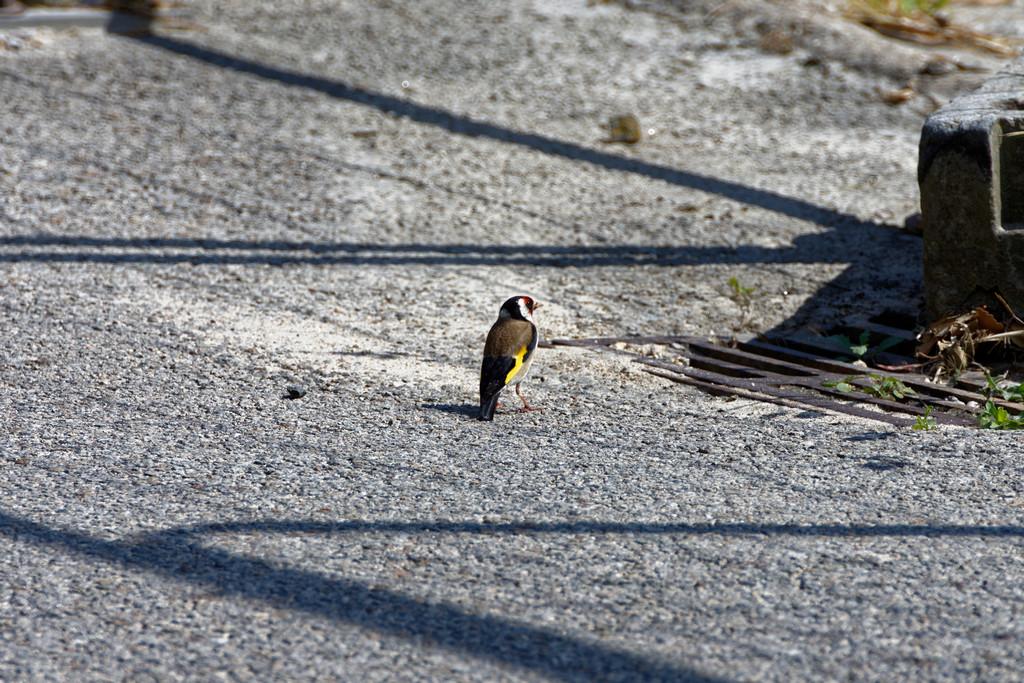 Oiseaux un petit un gros ! Dsc_3250