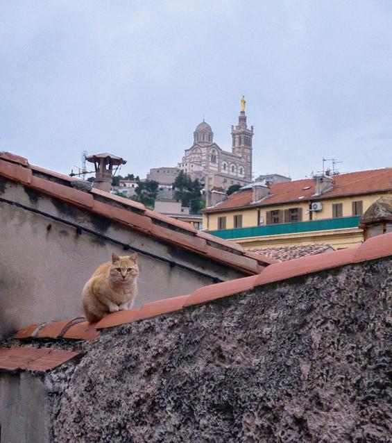 Matou sur les toits Le_mat11