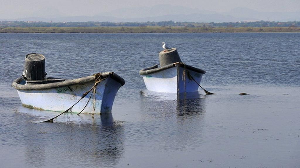Les barques P1080210