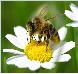 Gesundheit, Natur, Bienen