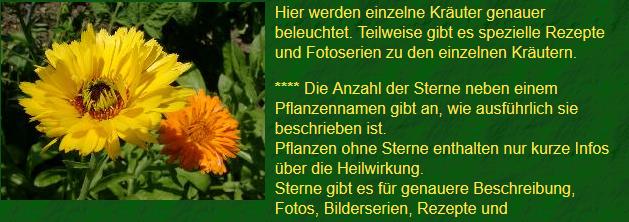 Kräuterlexikon Heilkr10