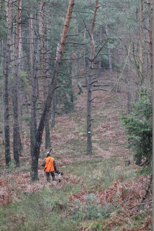 Pour GERARD / Territoire de chasse en Alsace - Page 4 Img_2810