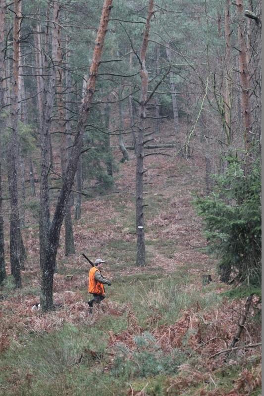 Pour GERARD / Territoire de chasse en Alsace - Page 4 Img_2811