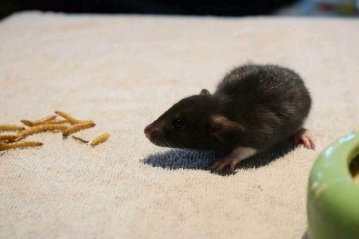 Spencer, Bella et Shiva bientôt à la maison Image-16