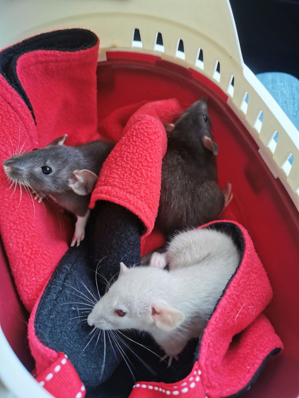 Spencer, Bella et Shiva bientôt à la maison Img_2014