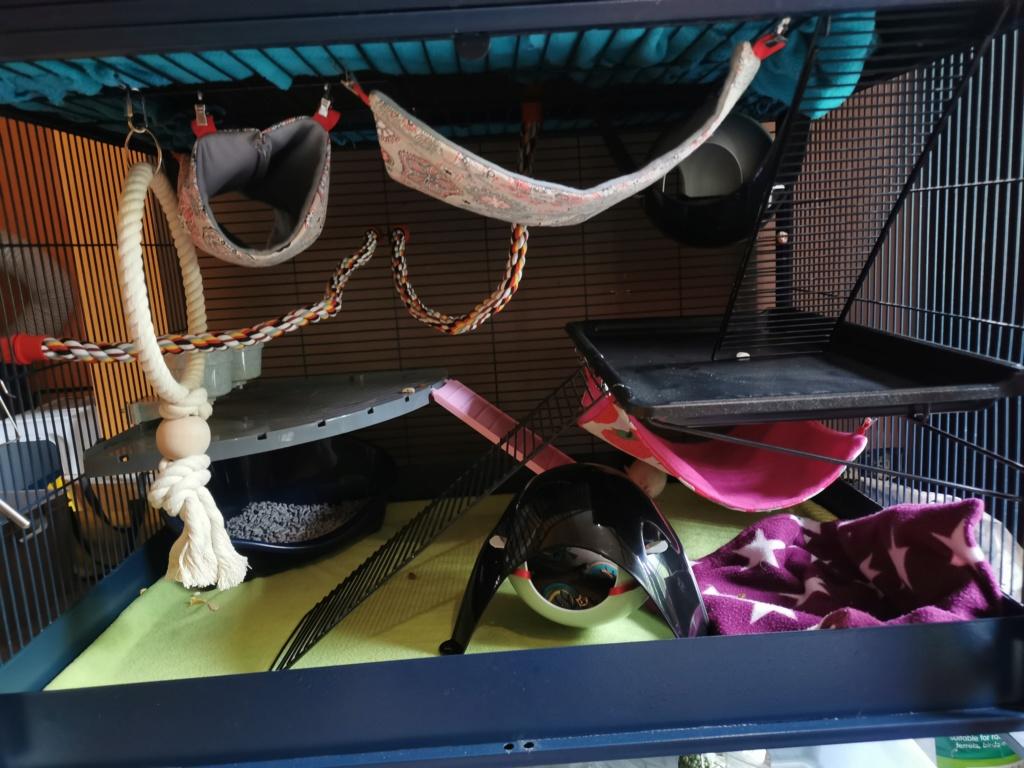 Spencer, Bella et Shiva bientôt à la maison Img_2015