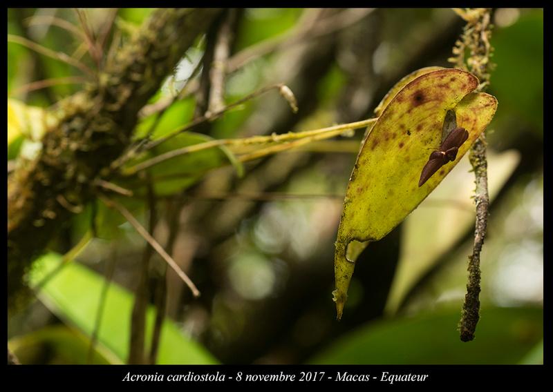 Voyage en Equateur. Acroni17