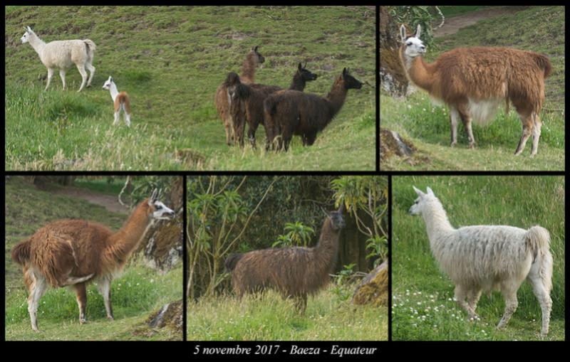 Voyage en Equateur. - Page 3 Baeza410