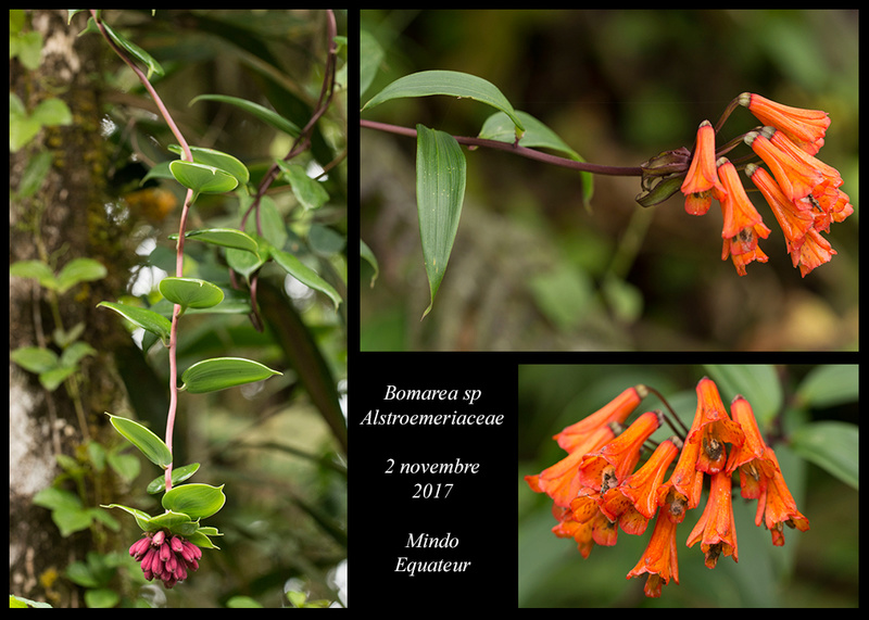 Voyage en Equateur. - Page 2 Bomare10