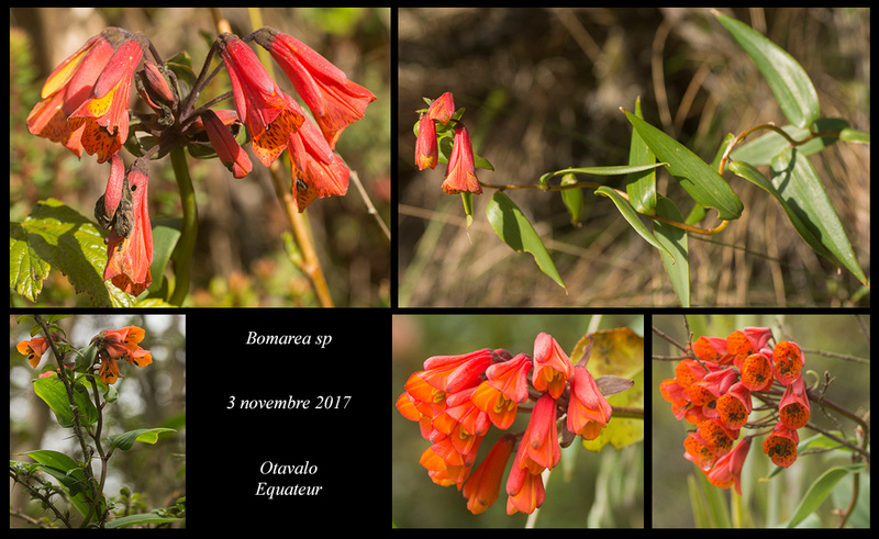 Voyage en Equateur. - Page 2 Bomare11