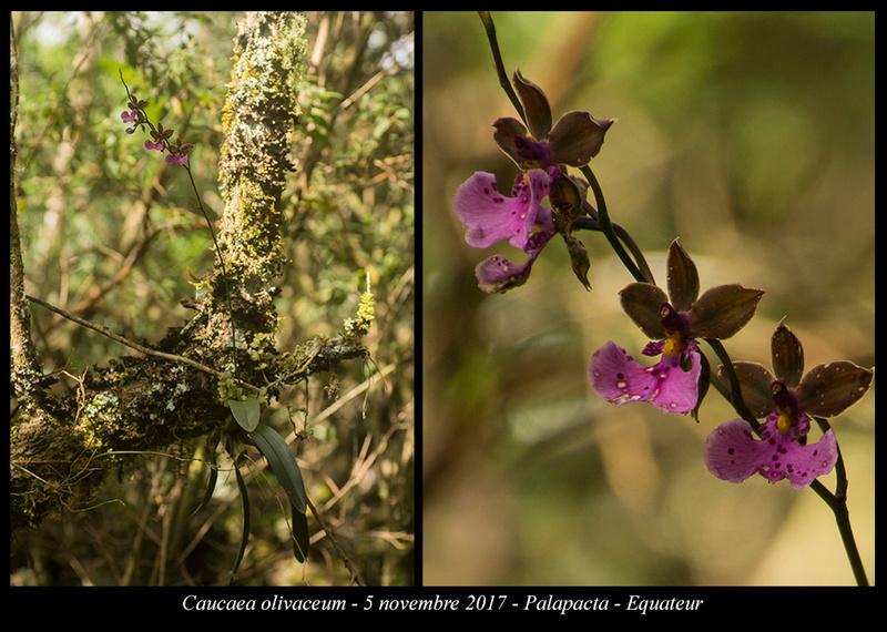 Voyage en Equateur. Caucae12