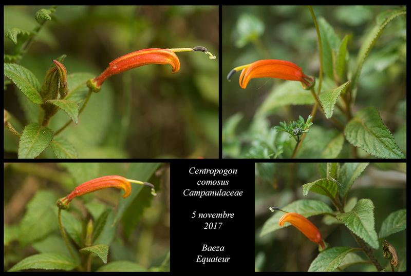 Voyage en Equateur. - Page 3 Centro10