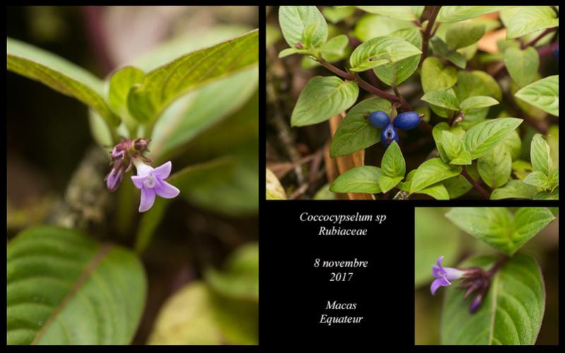 Voyage en Equateur. - Page 3 Coccoc10