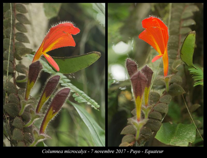 Voyage en Equateur. - Page 3 Column10