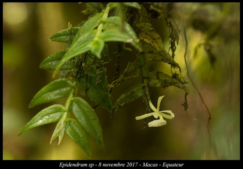 Voyage en Equateur. Epiden28