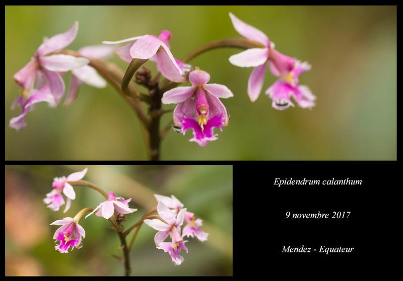 Voyage en Equateur. Epiden33