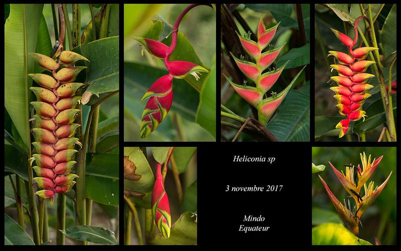 Voyage en Equateur. - Page 3 Helico13